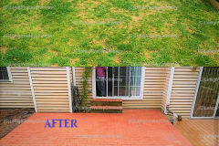 Before/After New Backyard Patio